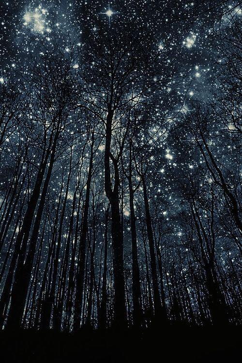 TREES + STARS